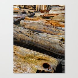 Driven Driftwood Canvas Print