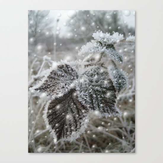 Ice cold beauty Canvas Print