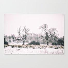 Wintery Morning Canvas Print