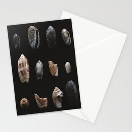 seashells I Stationery Cards