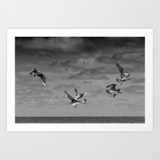 Seabirds Art Print