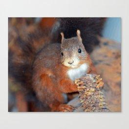 Red Squirrel (Sciurus vulgaris)  Canvas Print