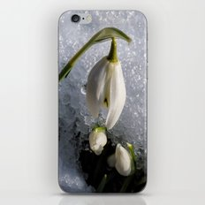 Snowdrops in the Snow iPhone & iPod Skin