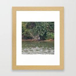 The Heron Framed Art Print