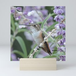 Ms. Hummingbird's Break Time in Mexican Sage Mini Art Print