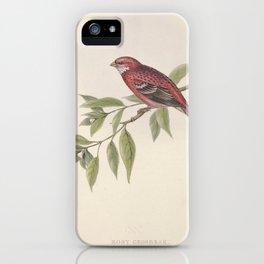 Rosy Grosbeak erythrospiza rosea11 iPhone Case