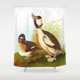 Buffel Headed Duck John James Audubon Vintage Scientific Birds Of America Illustration Shower Curtain