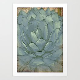 Agave Succulent Cactus Art Print