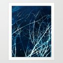 Twigs in Winter Cyanatope Print by pigeonsontheroof