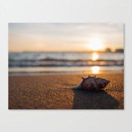 Seashore Seashell Canvas Print