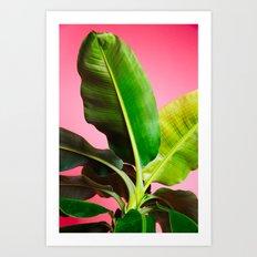 Banana Palm on Pink Art Print