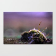 Moss Macro at Sunset Canvas Print