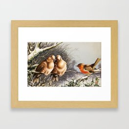 Vintage Chubby Winter Birds Framed Art Print