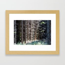 Majestic Walks Framed Art Print