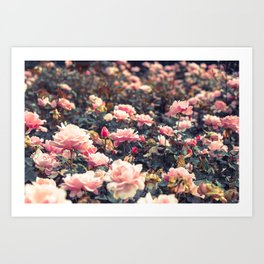 Queen's Mary Rose Garden. Art Print