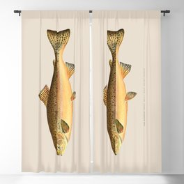 The Rainbow Trout Blackout Curtain