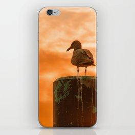 Seagull dreams iPhone Skin