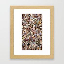 Seashells from Long Island Sound Framed Art Print