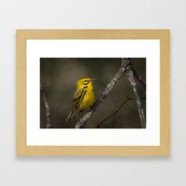 Prairie Warbler Framed Art Print