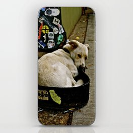 Guitar Case Dog iPhone Skin