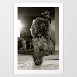 Primped and Groomed Art Print