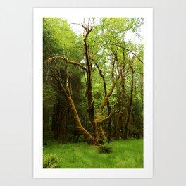 A Moos Laden Tree Art Print
