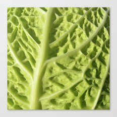 green savoy cabbage II Canvas Print