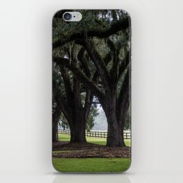 Tree Arch Drive iPhone Skin