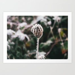 Thistle and Ice Art Print