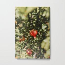 Pomegranate Tree | Fruit Tree nature fruit art print | nature fine art travel photography tree fruit Metal Print