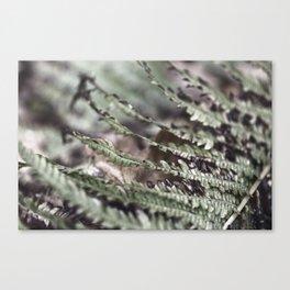 Fern 18 Canvas Print