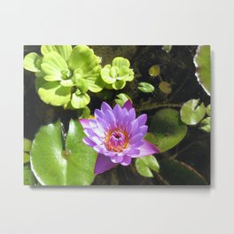 Purple Lilly Metal Print