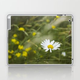 Flower. Oxeye Daisy (Leucanthemum vulgare) growing wild. Laptop & iPad Skin