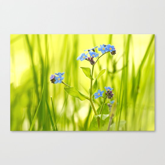 Lovely Morning Meadow Canvas Print