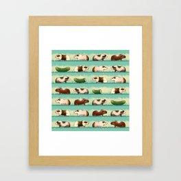 Guinea Pig Congo Framed Art Print