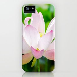 Single Water Lily iPhone Case
