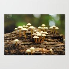 Mini mushrooms Canvas Print