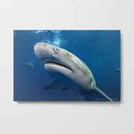 Lemon Sharks Metal Print