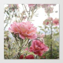 Sandia Roses Canvas Print