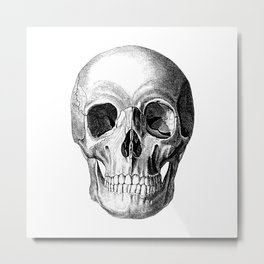 Grinning Skull Anatomical Illustration Metal Print