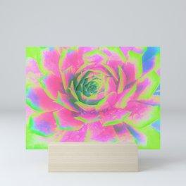 Lime Green and Pink Succulent Sedum Macro Mini Art Print