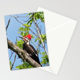 Male Pileated Woodpecker Stationery Cards