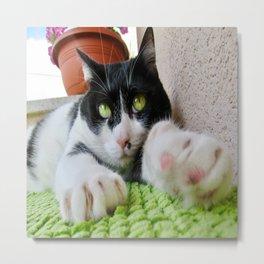Khoshek sweet cat Metal Print
