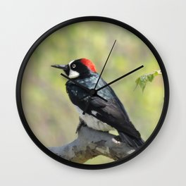 Acorn Woodpecker At Rest Wall Clock