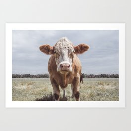 Animal Photography | Highland Cow Portrait Photography | Farm animals Art Print