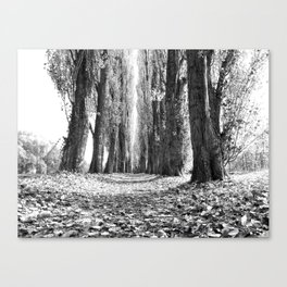 Poplar Avenue Canvas Print
