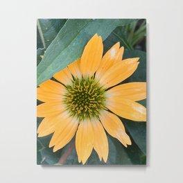 Peach Echinacea Garden Flower Digital Photography Metal Print