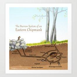 Chipmunk Burrow System Art Print