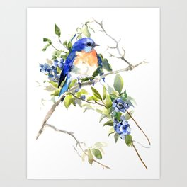 Bluebird and Blueberry Art Print