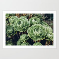Succulent - Part II Art Print